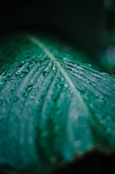 Selective focus photography of water droplets on a green leaf
