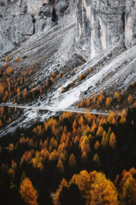 Yellow trees near a mountain