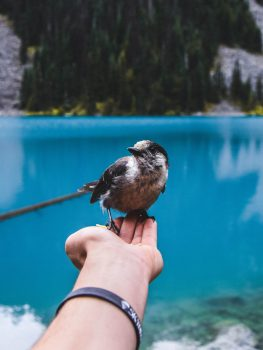 A bird perched on a person's hand