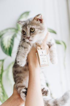 A person holding a cat wearing a tag