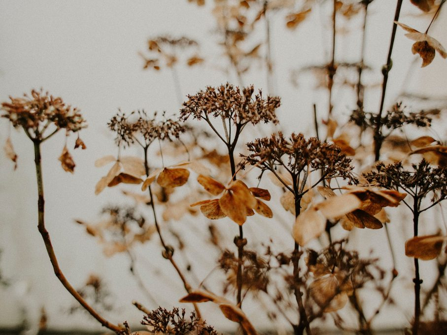 Brown plants and flowers