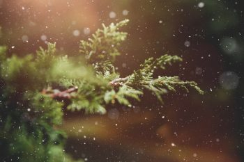 Close-up photo of a Christmas tree branch with falling snow