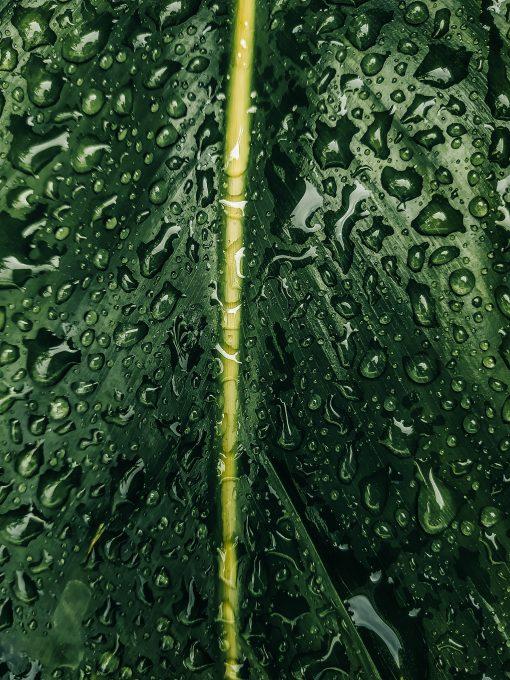 Close-up photo of a wet leaf