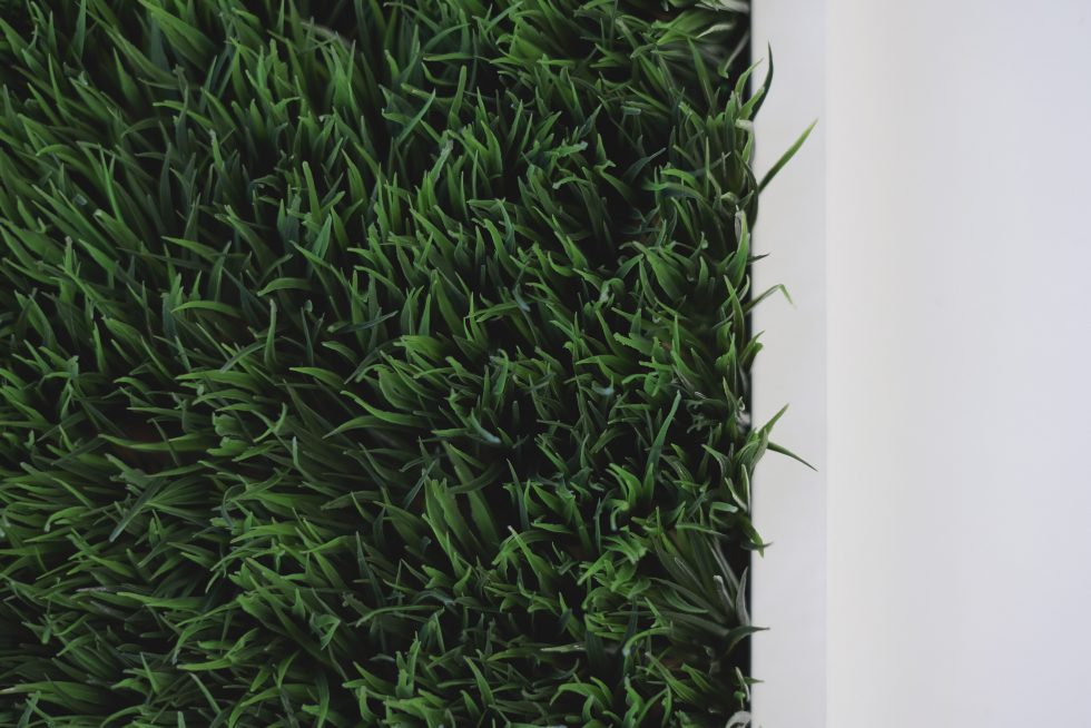 Close-up photo of green grass