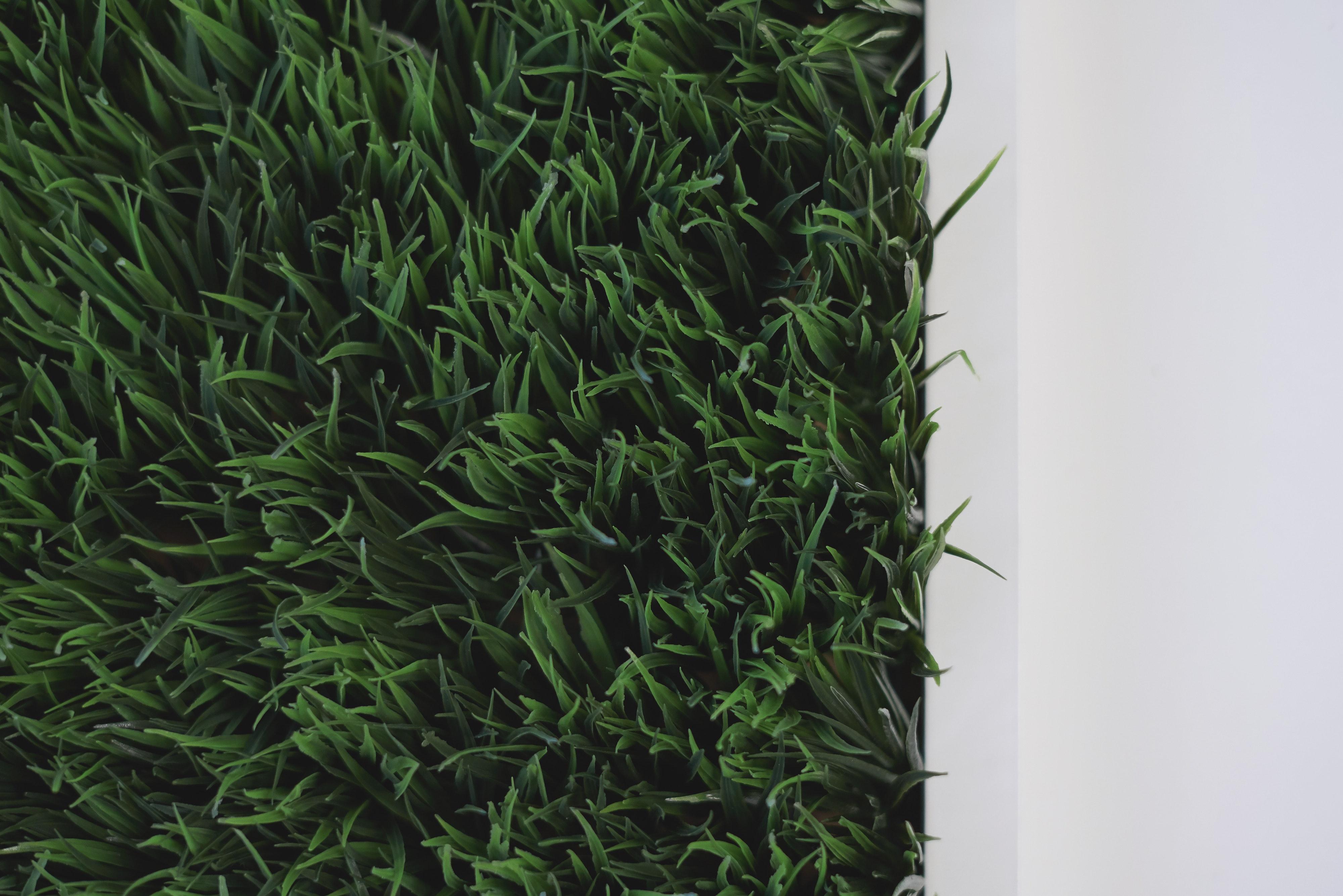 Close-up photo of green grass
