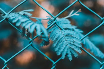 Close-up photography of a green leaf plant growing through a fence