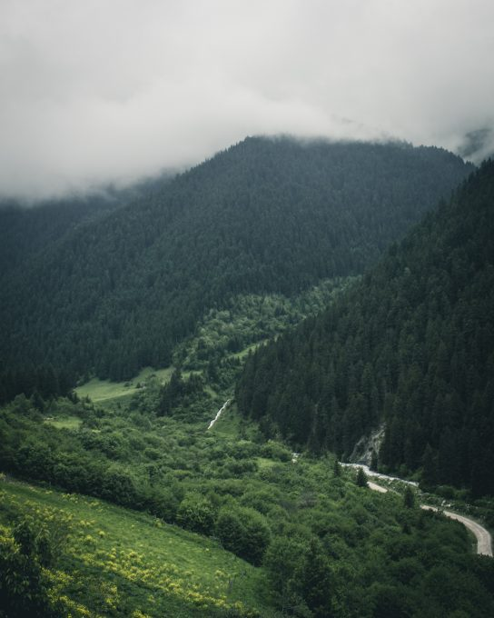 Deep green forest on a mountain covered by fog