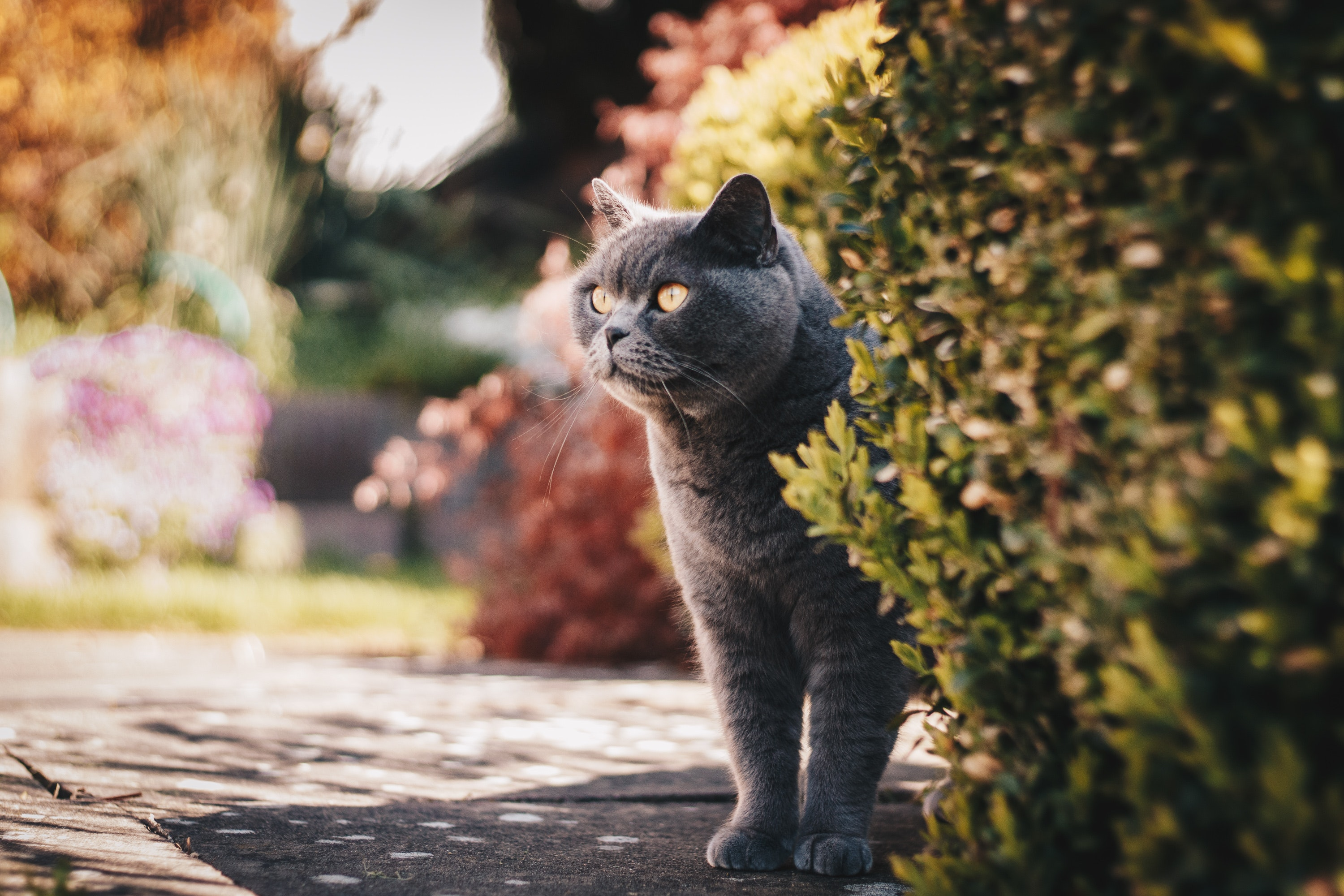Selective focus photography of a grey cat