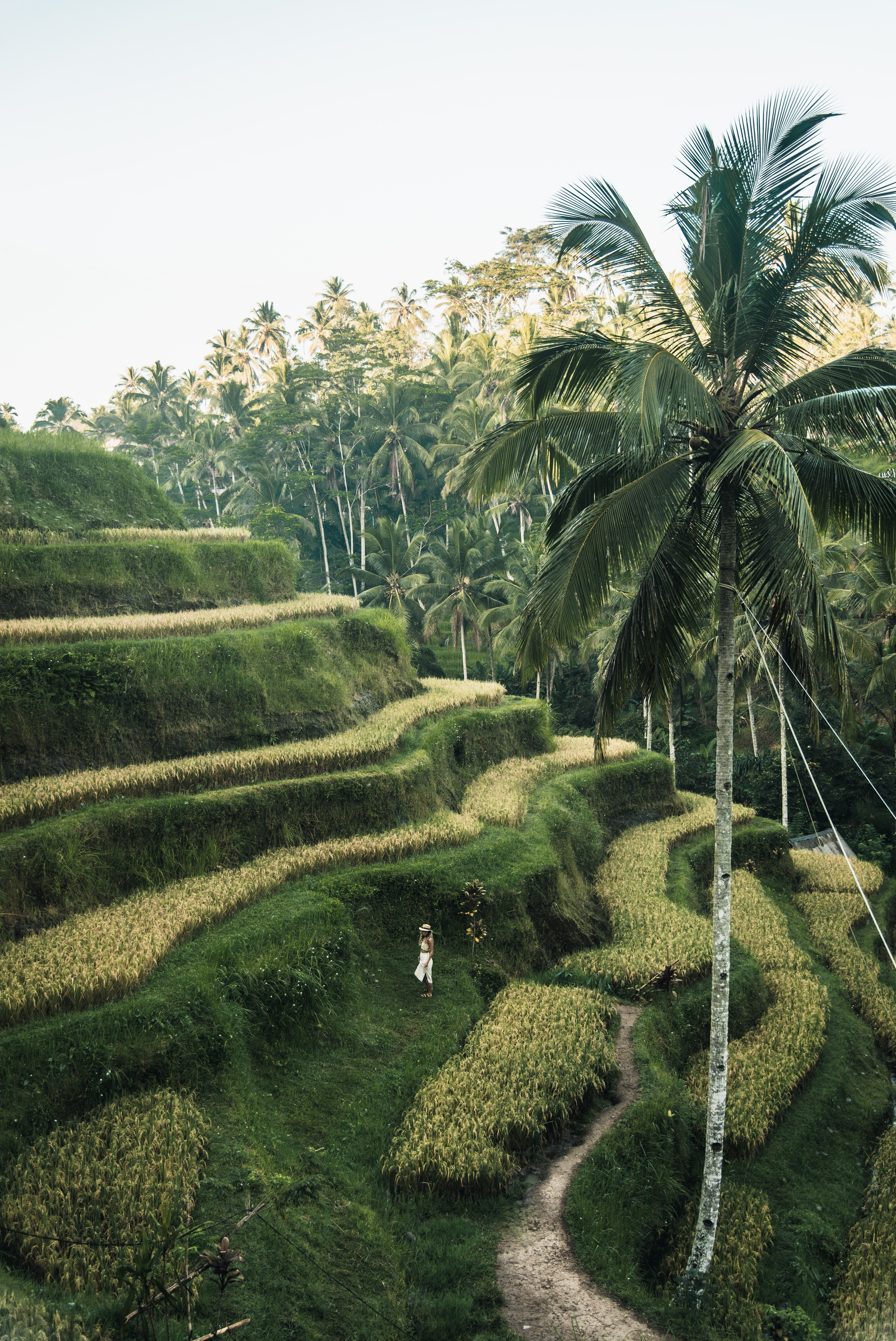 A person standing on rice terraces