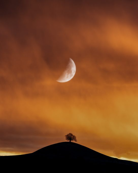 A silhouette of a tree under half moon