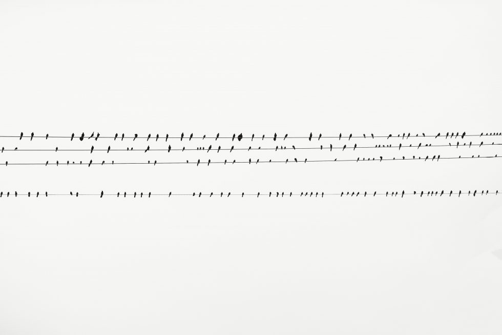 Birds perching on cable lines
