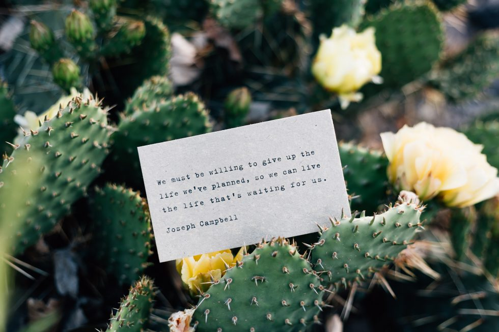 Photo of a card lying on cactus plants
