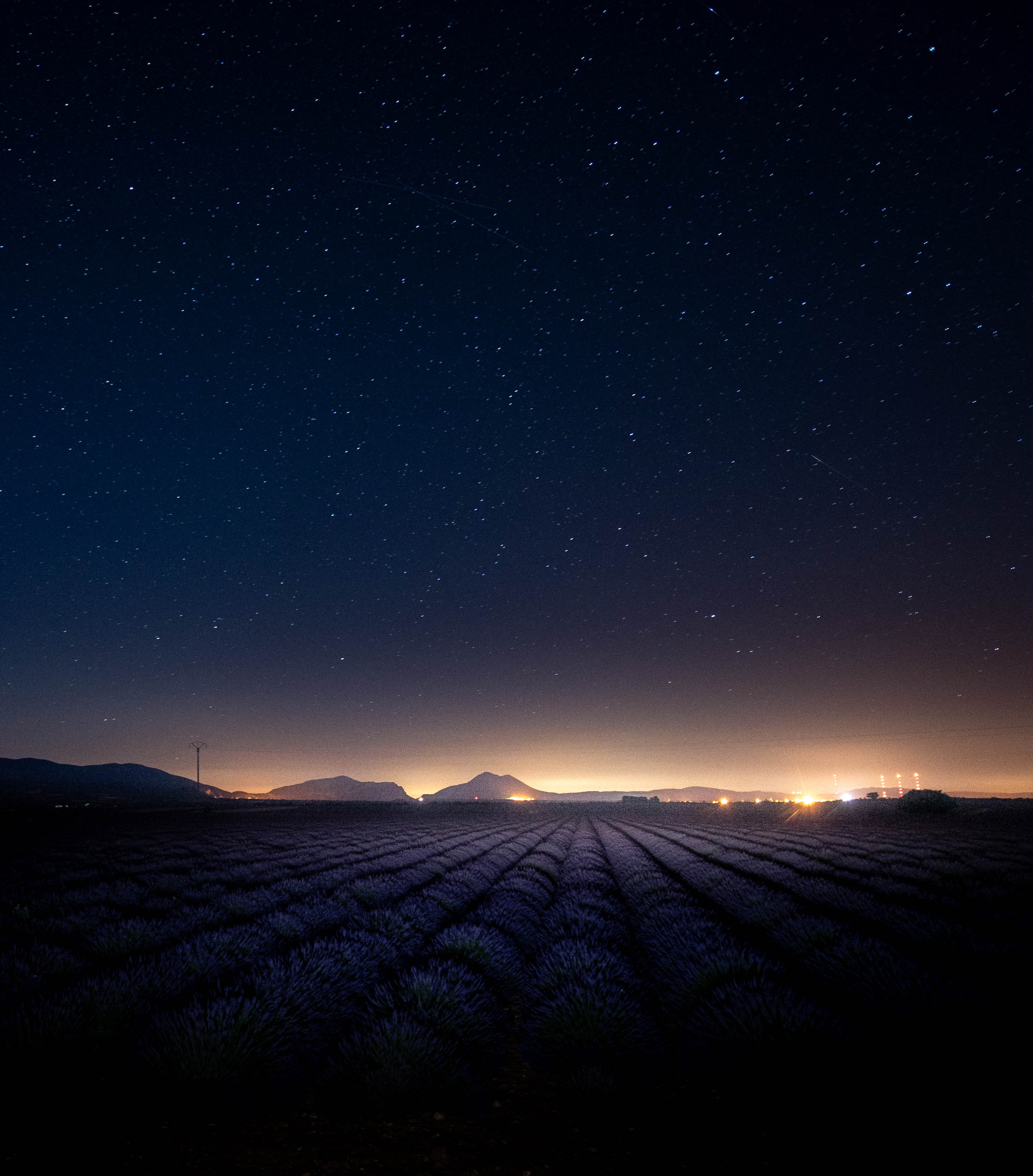 Photo of the starry night sky over lavender field
